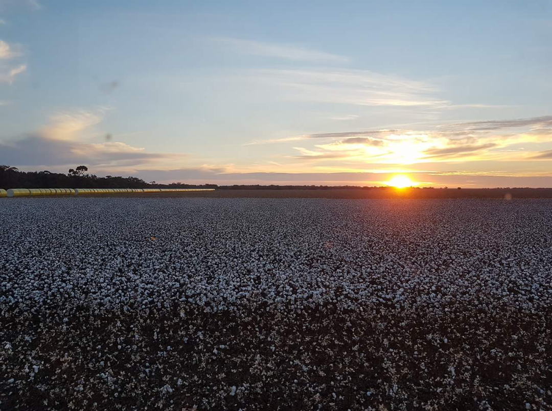 southern region to be australia's biggest cotton growing area